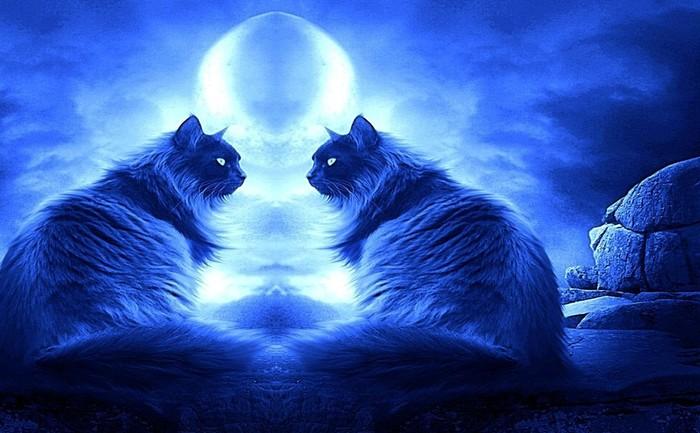 Romancing-Night-cats-16249934-1280-800.jpg.jpg